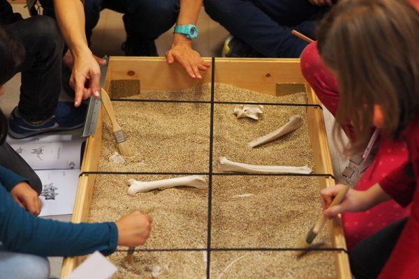 Taller de excavación paleontológica