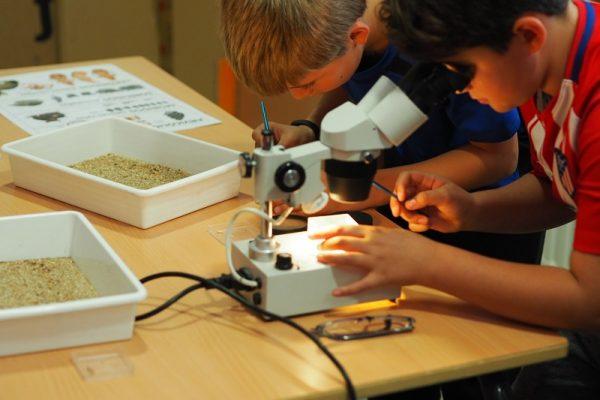 Los micromamíferos tienen importancia bioestratigráfica y paleoecológica