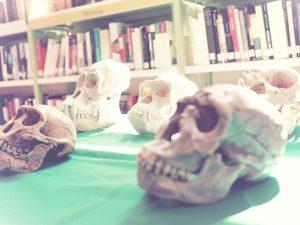 Réplicas de cráneos Geosfera